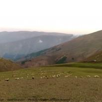دایلاسر – ارتفاعات شفت