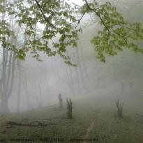 ارتفاعات امامزاده اسحاق – شفت